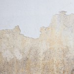 Is it Mould? - Amity Environmental - Calgary Mold Experts