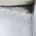 Mold: Early Signs of Mold Development - Amity Environmental - Calgary Mold Experts