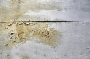 he Myths and Facts about Mould - Amity Environmental - Mold Removal Experts Calgary