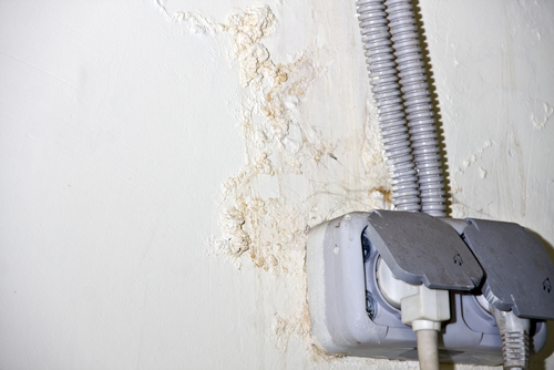 Mold Families: Aspergillus, Cladosporium, and Stachybotrys - Amity Environmental - Mold Removal Experts Calgary