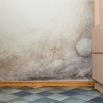 Moulds Commonly Found in the Office and Home - Amity Environmental - Mould Removal Experts Calgary