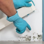 Why You Need to Hire a Professional to Deal with Mould - Amity Environmental - Mold Removal Experts