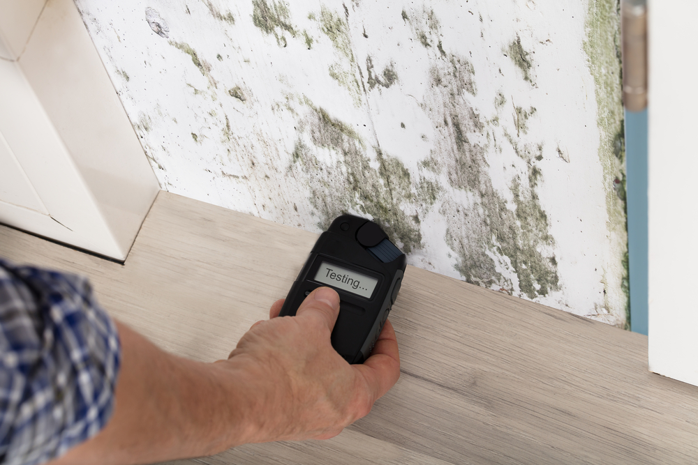 The Most Common Places in Your Business You May Find Mould - Amity Environmental - Mould Removal Experts