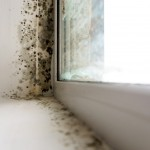 3 Interesting Facts about Mould - Amity Environmental - Mold Removal Experts