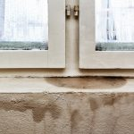 Can Sewage and Water Backups Cause Mould in Your Basement? - Amity Environmental - Mold Removal Experts