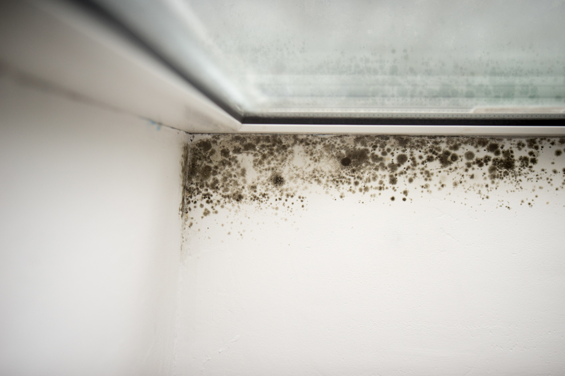 Preventing Mould Growth Over the Cold Months - Amity Environmental - Mold Removal Experts